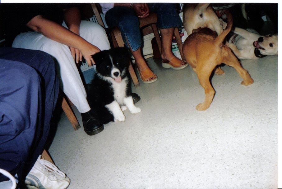 puppypreschool.jpg